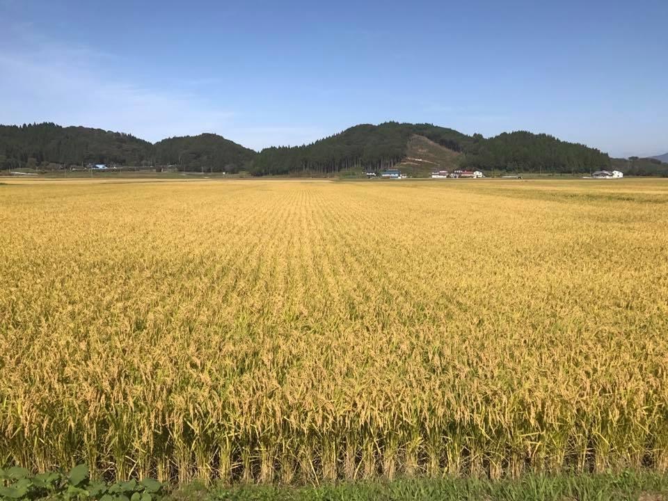 ①魚沼に引けを取らない産地「福島県会津」