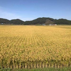 五ツ星お米マイスター・小池さんに聞く、足を運んで食べたいお米の産地と「めしのとも」その0