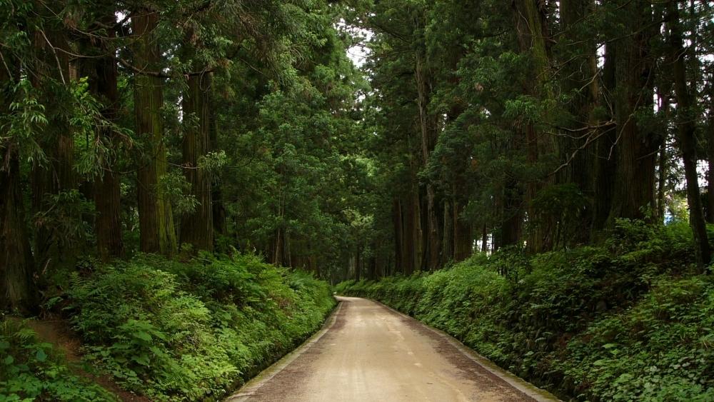 【3】ドライブにおすすめ! 世界で最も長い並木道「日光杉並木街道」