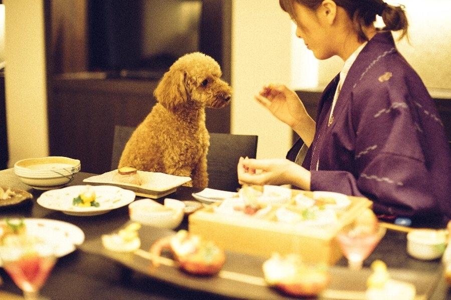 ワンちゃんの夕食も会席料理!?