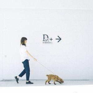 《愛犬と特別な旅を♡》ワンちゃんと泊まるラグジュアリーホテルとは