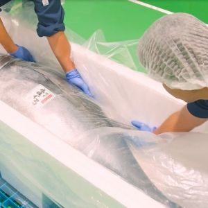 愛媛・宇和海から本マグロをお届け! 辻水産の「冷凍 だてまぐろ詰合せ」その0