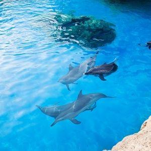 1日中いられるテーマパーク。世界一の水族館「珠海長隆海洋王国」とは
