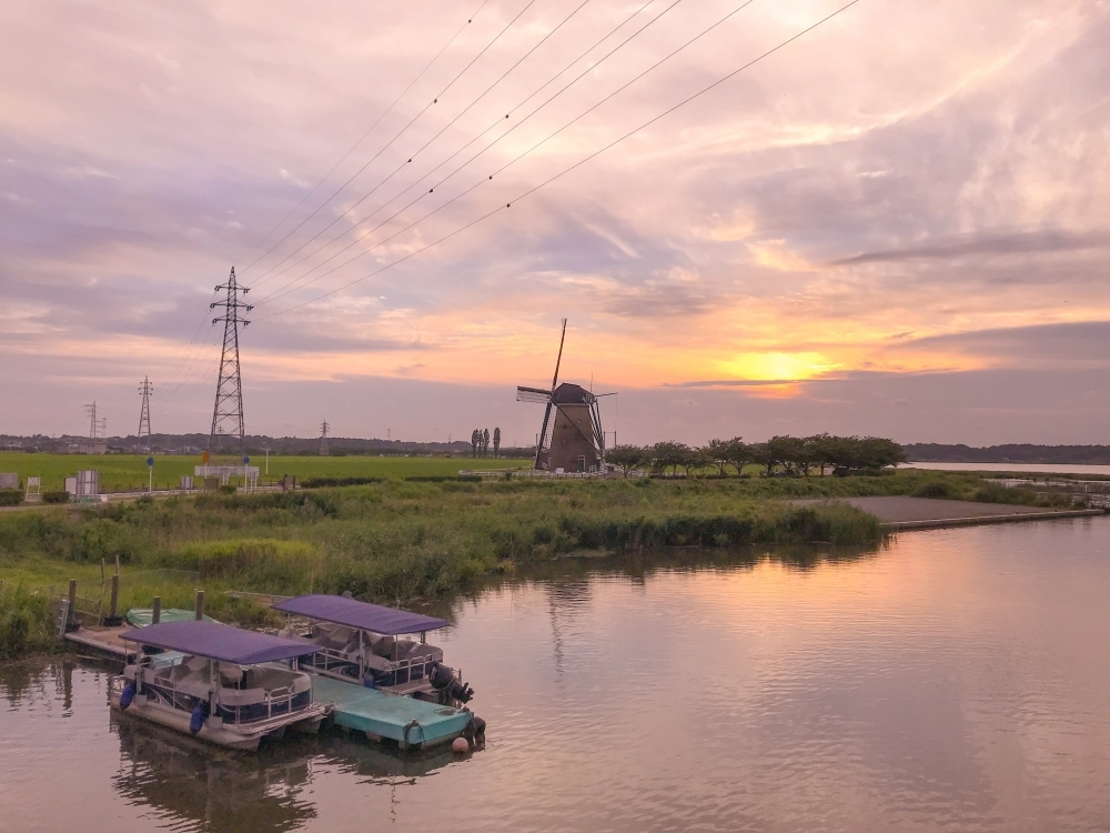 ひまわりと夕陽の絶景!千葉で「風車のひまわりガーデン」開催その3
