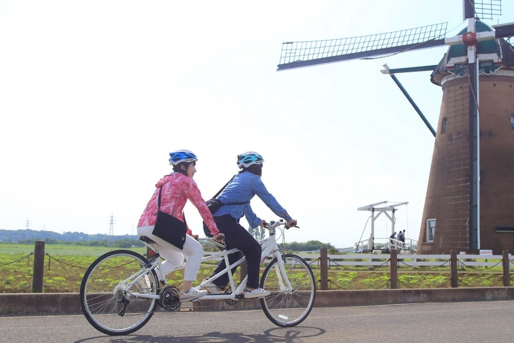 ひまわりと夕陽の絶景!千葉で「風車のひまわりガーデン」開催その4