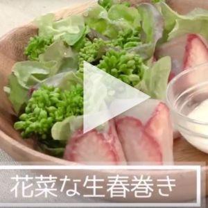 <連載vol.3>動画でカンタン!野菜ソムリエレシピ 京野菜を使った「花菜な生春巻き」 その0