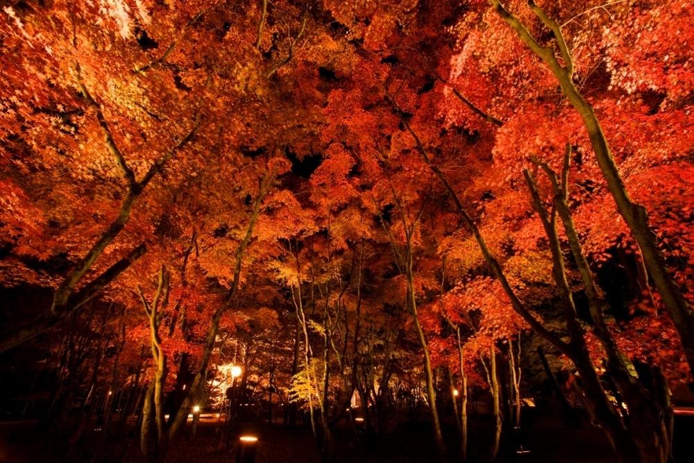 美しい紅葉を堪能するライトアップイベント3選