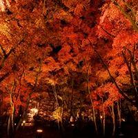 【全国】美しい紅葉を堪能するライトアップイベント3選