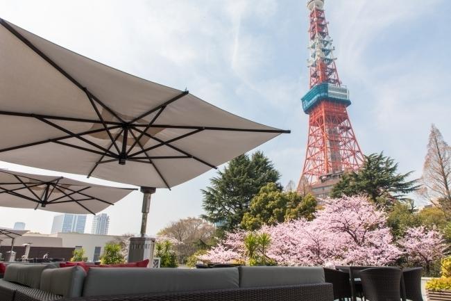 桜×東京タワーの絶景を眺めながらとっておきのお花見グルメを堪能