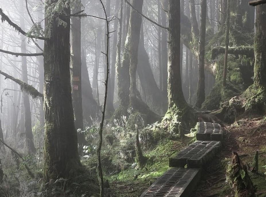 映画『アバター』を彷彿とさせる、静寂と神秘を感じる森へ。