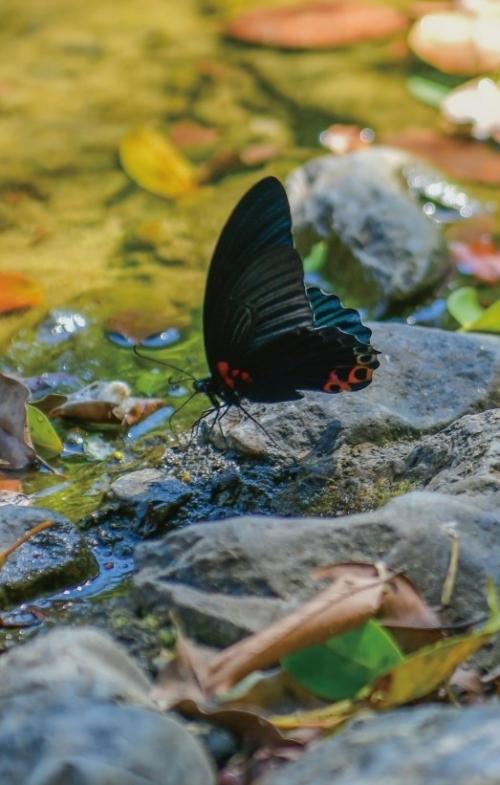 その数、なんと200種類。色とりどりの蝶が舞う楽園。