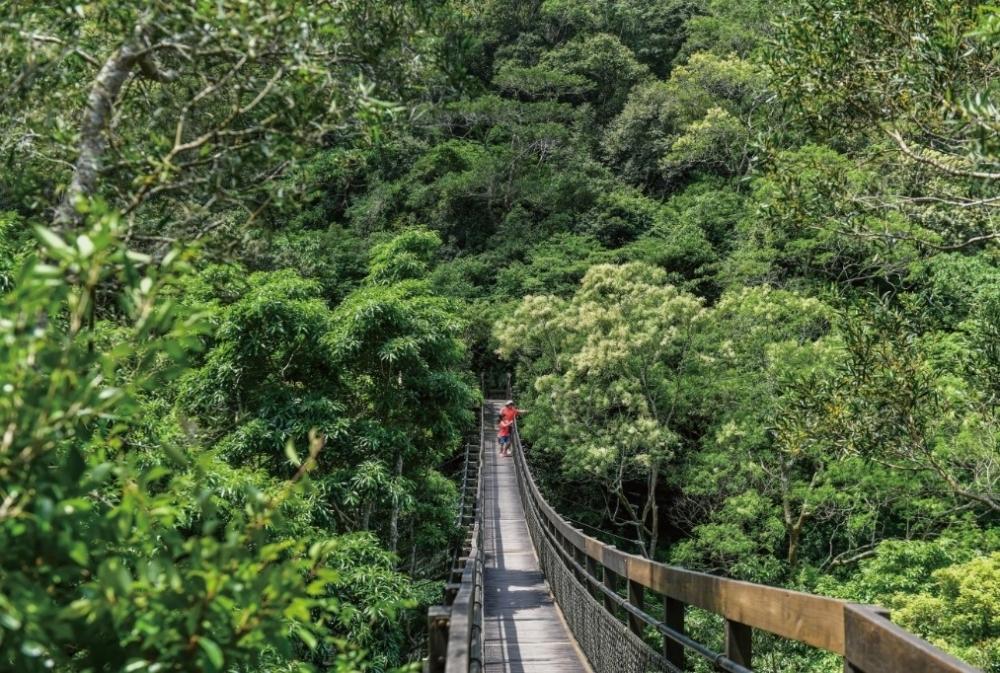 何層にも連なる木々のグラデーションが見られる吊り橋へ。