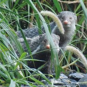 【台湾情報】希少な動植物との出合い&天然のスパ。森林遊楽區で五感に染み入る癒しの旅を。その0