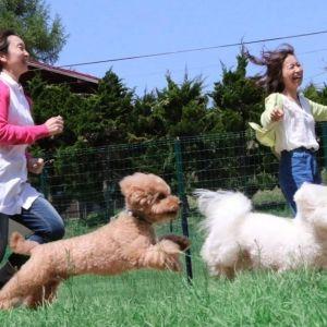 愛犬と共に岡山の貸し別荘へ「岡山ひるぜん貸別荘ピーターパン」で自然を満喫