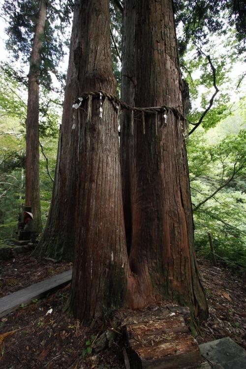 豊かな自然、栃尾又薬師堂、杉&檜の大木…パワーをたっぷりチャージ