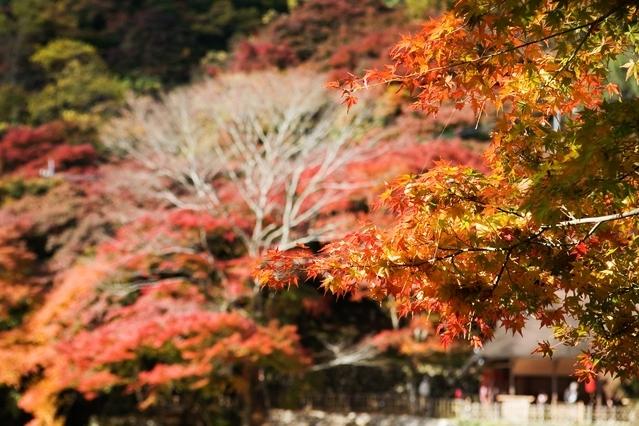 一度は行きたいおすすめ紅葉スポット④香嵐渓