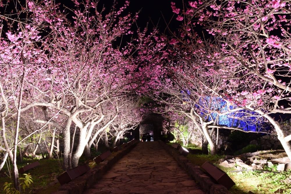 世界遺産・今帰仁城跡と桜のライトアップ「今帰仁グスク桜まつり」