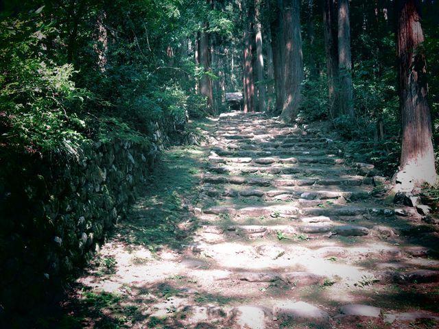 日本の百選を間近に眺めながら進める見学コース