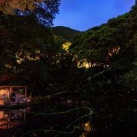 伊豆で優美なほたる観賞!幻想的な世界を体験できるイベント開催