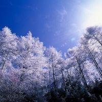 「星のや軽井沢」で1日1組。冬のアウトドア体験プログラムが始まった!