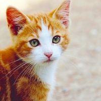 10月まるっと開催!猫への愛であふれる街「吉祥寺ねこ祭り」開催
