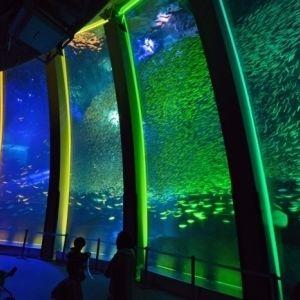 聖夜にぴったり!水族館のX'masイベント【東京・横浜】