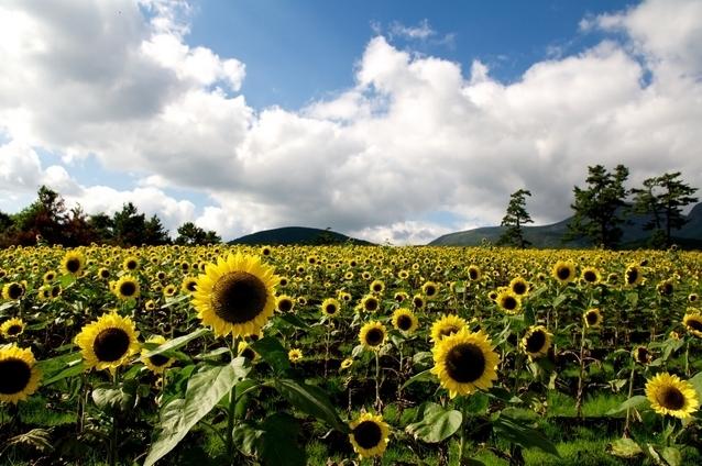 くじゅう花公園(大分県)
