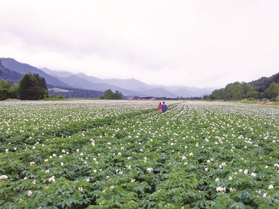 季節によって違う体験ができるのも農家民宿の魅力