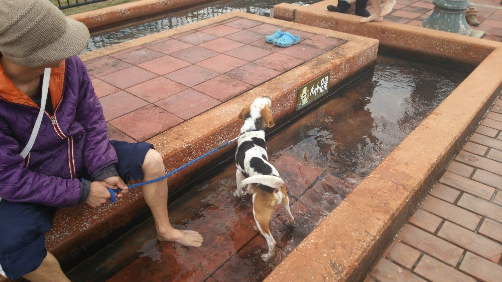 日本で一番の熱量を誇る小浜温泉の、日本で一番長い足湯でほっこりしようその2