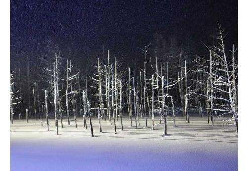 ①美瑛白金 青い池