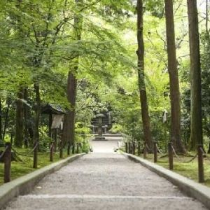 自然に触れあう奈良の旅。ゆったり観光向けのおすすめルート