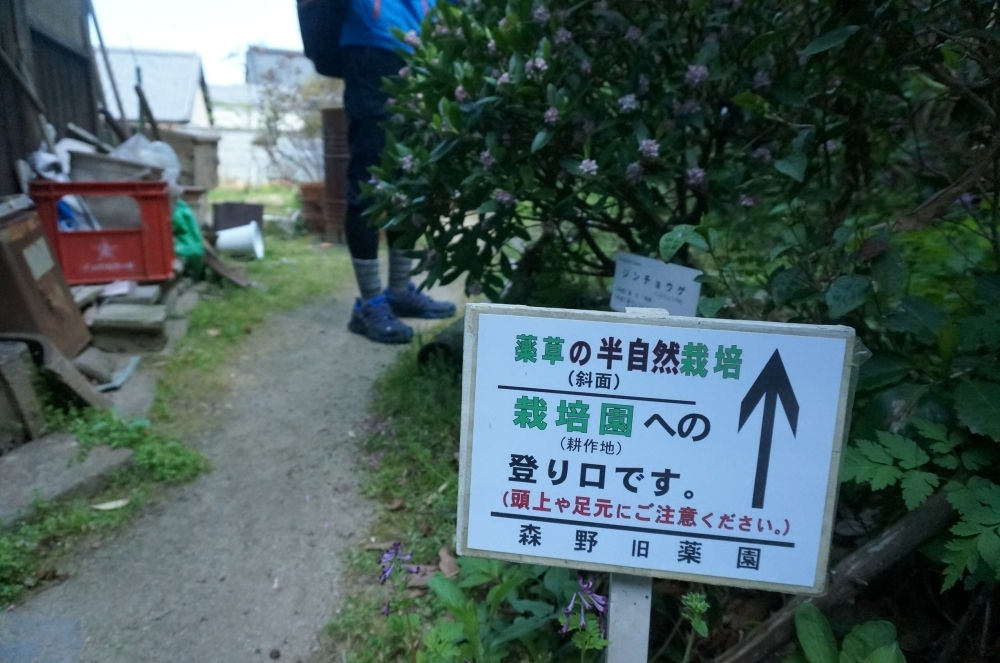【日本ならいごとの旅 第5回】日本書紀に遡る薬草のふるさと・宇陀で暮らしに生きる植物の知恵を学ぶその3