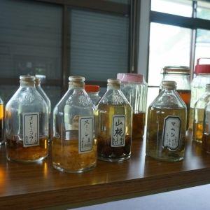 【日本ならいごとの旅 第5回】日本書紀に遡る薬草のふるさと・宇陀で暮らしに生きる植物の知恵を学ぶ