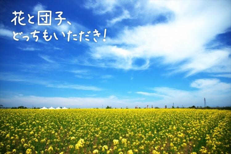 あたり一面が黄色い絨毯「ひと足先に春を感じる 房総日帰りドライブ旅」