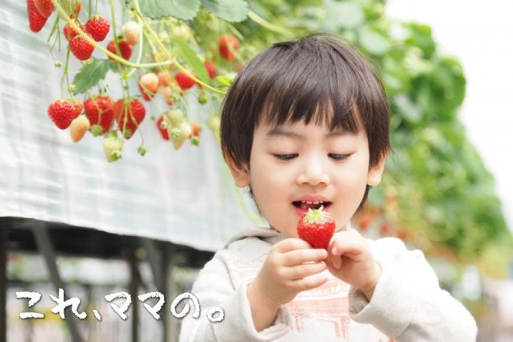 子供と楽しめるスポットがいっぱい「栃木で甘いイチゴ狩り! 子連れで行く日帰り旅」