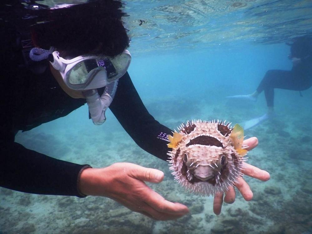 貸切ツアーの活用方法③ 珍しい魚や生き物と触れ合う