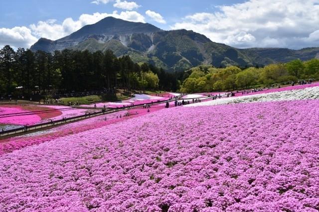 おすすめ観光スポット①芝桜の丘