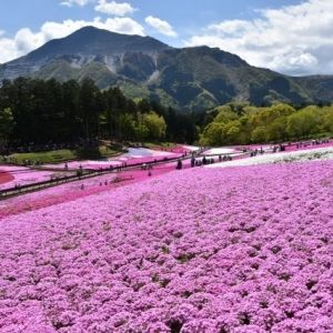 ショートトリップなら埼玉へ!自然・アクティビティ・歴史ロマンを満喫する旅