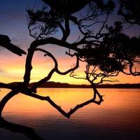 """島の恵みを堪能できる宿。奄美のオーベルジュでのんびり""""おとな旅"""""""