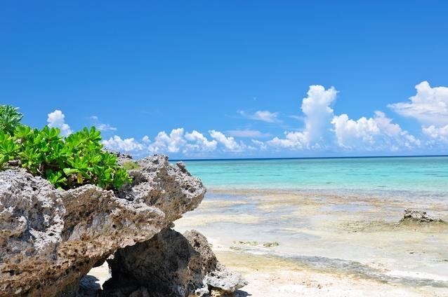 ナイトツアーにおすすめの島①石垣島