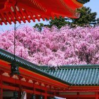 春の京都に出かけよう。雅な桜に出合える「桜の名所」TOP4
