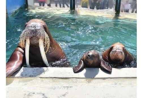 「おたる水族館」で海獣ショーを楽しむ