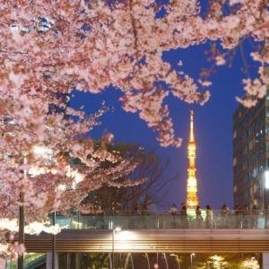 【首都近郊】屋外ラウンジから、露天風呂から……。今年は桜のライトアップをリッチに楽しもう。