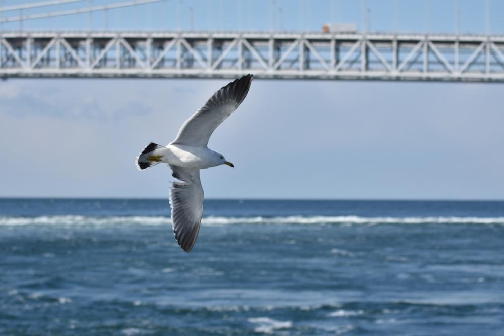 淡路島から出航する、渦潮とカモメに出会う船旅。冬季限定のうずしおクルーズへその3