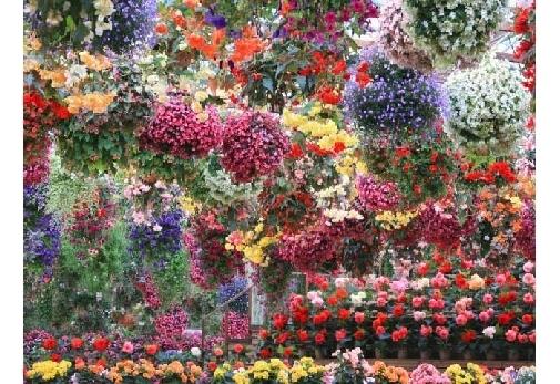 1年中満開のお花が見れる