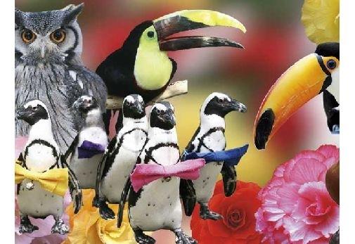 90種類もの鳥とも出会えます!