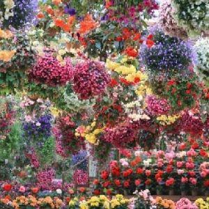 年中満開の花を見に行こう。島根にある「松江フォーゲルパーク」とは?その0