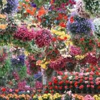 年中満開の花を見に行こう。島根にある「松江フォーゲルパーク」とは?