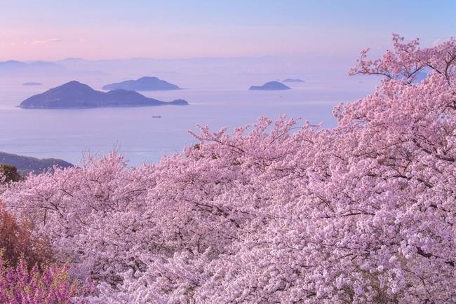 全国の桜を家で見られるのはオンラインならでは