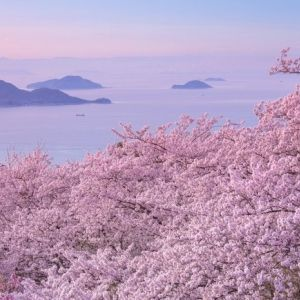 オンラインで絶景お花見気分「桜ドローンプロジェクト2021年」その0